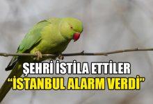 Photo of İstanbul'da yeşil papağan istilası